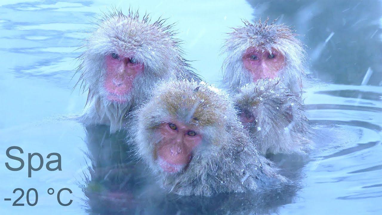 Relaxar - Spa dos Macacos e Música Relaxante