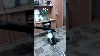 Наша Кошка Феня