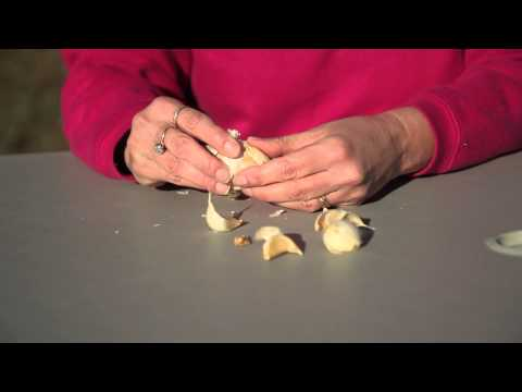 How to Plant Garlic in Ohio : Planting Garlic & Gardening Tips