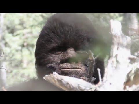 The Bizarre True Story Of Bigfoot