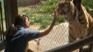 Louisville , Ky    Zoo   Tiger Training Demo Goes Bad