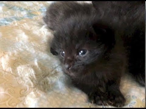 Kitten's Getting Active & Momma Is Getting Curious - #8 - Feral Cat Family Socialization