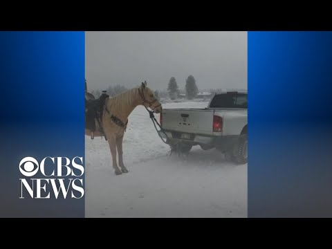 Video of a horse dragged by a truck leads to animal abuse investigation