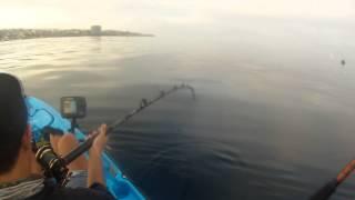 Fishing Diaries 19 - La Jolla Kayak Fishing - 33lb California Yellowtail