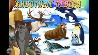 Развивающие видео для детей.Учим животных севера