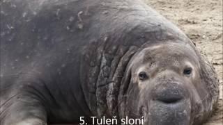 TOP 10-Najväčších zvierat na svete