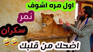 زبج وندش حديقة الحيوان في اليمن اضحك من داخل قلبك ههههههههههههههههههه قوووه لا يفوتك