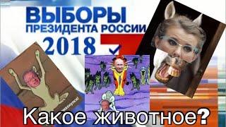Выборы 2018 приколы!!! Будущий ПРЕЗИДЕНТ..какое ЖИВОТНОЕ? Знай за кого голосуешь !