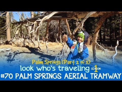 Palm Springs Aerial Tramway (Things to do in Palm Springs with Kids ): Look Who's Traveling