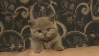 Котенок по имени Лео, новый член семьи!
