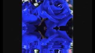 видео Купить букет синих роз. Заказать букет синих роз с доставкой