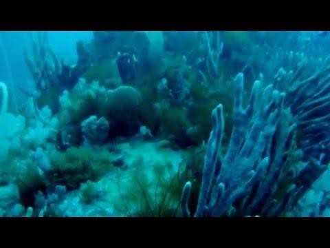 Bicheno offshore diving