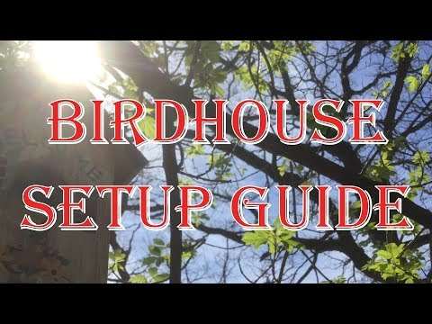 Birdhouse Setup Guide - Should You Clean Out Last Years Nest?