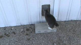 Barn Cat Life...