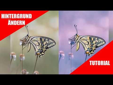 Makrofotografie Hintergrund ändern; Photoshop Tutorial; Color Correction