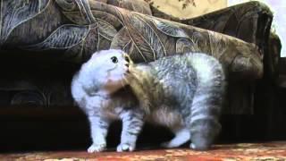 Смешное видео,кот орет!!!
