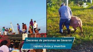 El accidente ocurrió en el kilómetro 32 de la carretera Mérida-Campeche cuando el chofer de la unidad se durmió al volante y colisionó con el muro de contención para terminar volcando fuera de la carretera; pobladores se llevaron los animales tanto vivos como muertos