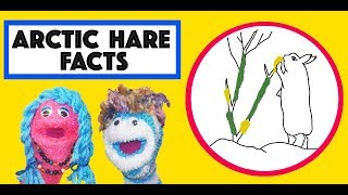 Arctic Hare Song | Music for Kids | | Story time with Annie & Rocco