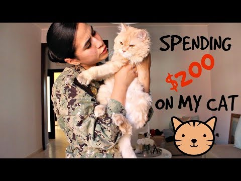 I SPENT $200 ON MY CAT | AMAZON CAT MUST HAVES