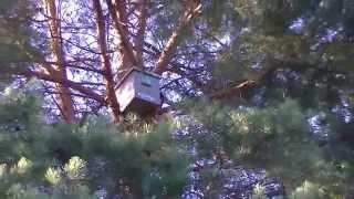 ловля пчелиных роев чясть 2 сбор урожая