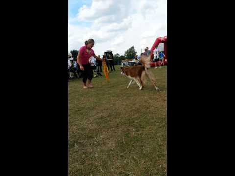 Dancing dogs to Foss dyke band