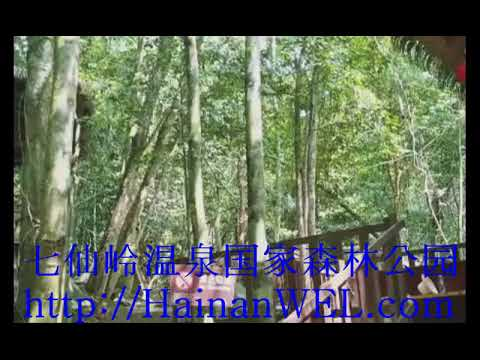 Jungle in Hainan   National Forest Park Hot Spring on the island of Hainan, China   address on the m