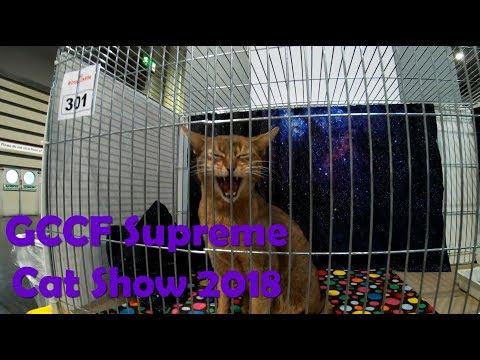 GCCF Supreme Cat Show 2018 (Birmingham NEC)