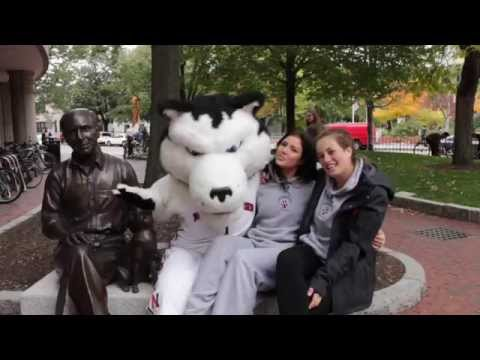 Shake It Off Northeastern University Athletics Lip Dub