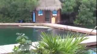 Отдых в Мексике (парк Xel-Ha), Mexico Yucatan, Xel-Ha часть3