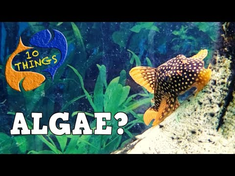 Conquering Aquarium Algae, Is It Easy Or Impossible? 10 Things Algae!