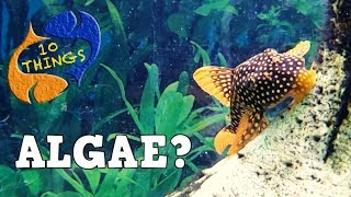 Conquering Aquarium Algae, Is It Easy Or Impossible? 10 Things Algae!