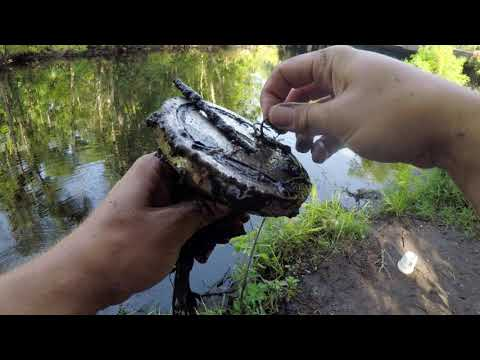 Magnet Fishing Jacksonville Florida!