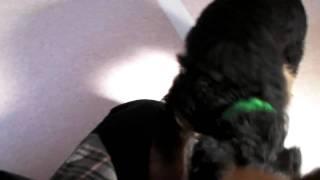 大型犬で希少、【キングオブテリア】のエアデールテリアの子犬が産まれ...