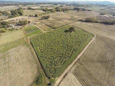 Bose Family Farm Corn Maze 2015