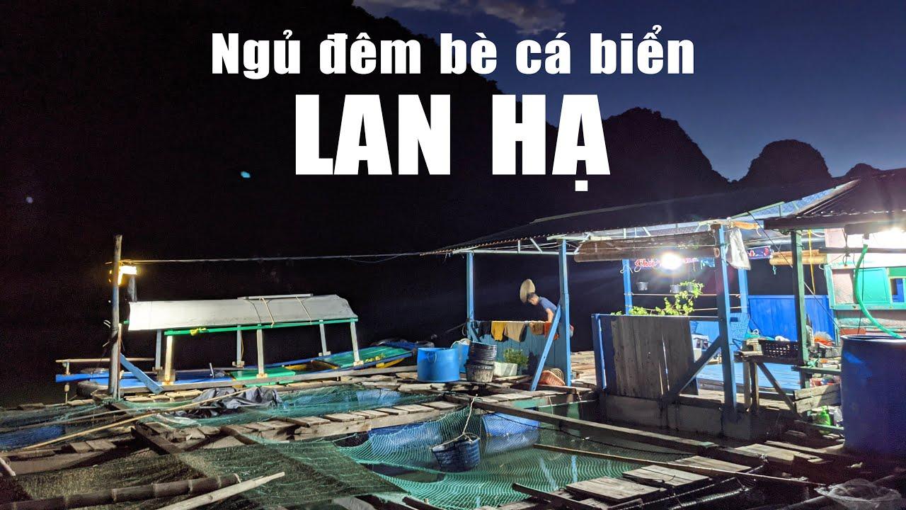 Cuộc sống độc đáo trên bè cá biển của ngư dân Lan Hạ, Cát Bà, Hải Phòng