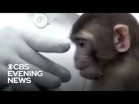 Researchers say COVID-19 vaccine effective in monkey tests