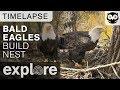 Bald Eagles Build Nest - Decorah Eagles Time-lapse 10/26/17