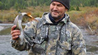 Чумовая рыбалка на горной реке .Хариус на килограмм.