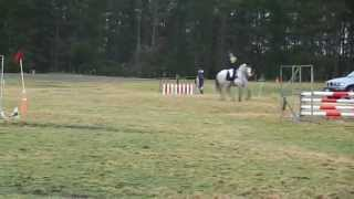 Show Jumping at Roydvale ODE