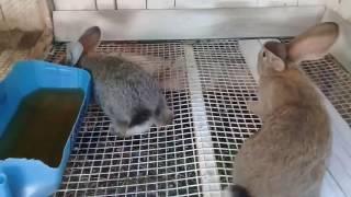 Обзор крольчат в новом доме.Крольчата до 45 деньков.