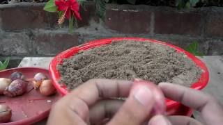 How to Grow Onions From Bulbs | Grow Your Own Onions | Winter Vegetables | 2016 (Urdu/hindi)