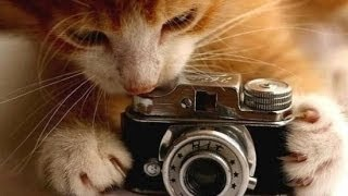 Кошки,это кошки...