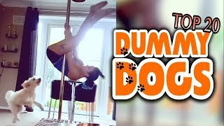 Top 20 Dummy Dogs || Dog Fails Compilation