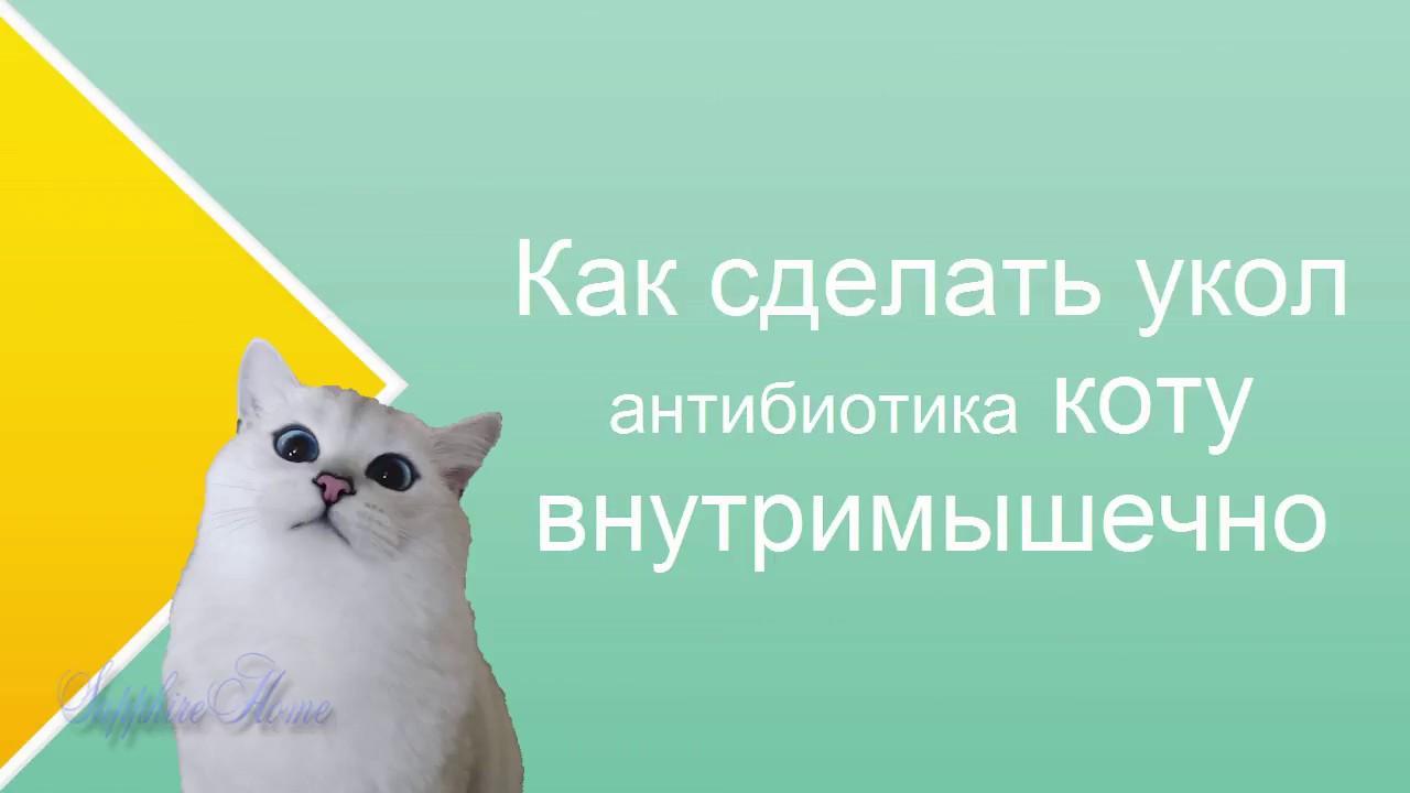 Как правильно сделать укол кошке внутримышечно видео