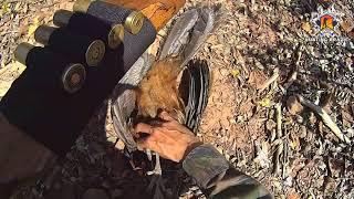 Caçada Jacú   Hunting Brazil