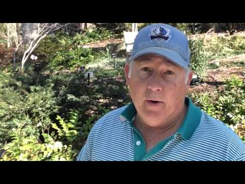 garden design with introduction to diy home uamp garden projects channel youtube with succulent garden design - Home And Garden Home Giveaway