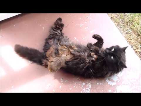 Feral cat gets groomed - before and after