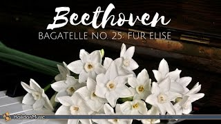 Beethoven - Für Elise | Classical Piano Music