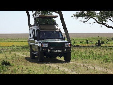 A Day on Safari in the Masai Mara