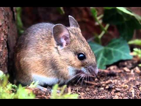 Terrestrial Mammals Share 60